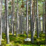 forest-272595-resize